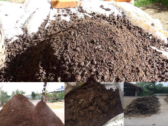 TKS-M.2 :Ủ vỏ cà phê - Phân hủy rác thải - phân chuồng 2